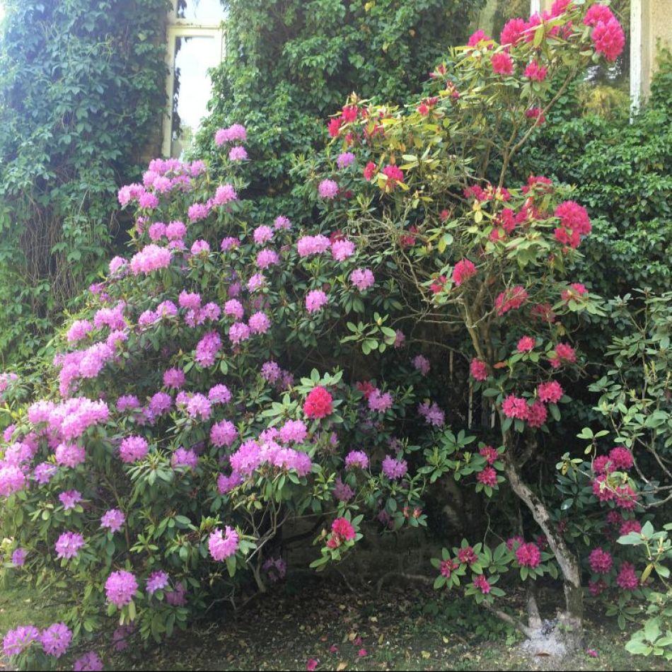 De tuin van de Barones
